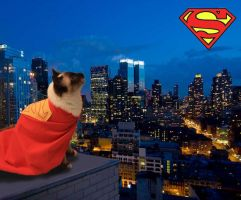Supercat by dandlit