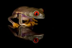 Frog in the dark by AngiWallace