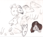 12. Tapir Studies by Alliieennss