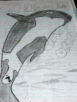 Killer whale by Im-ur-misconception