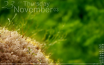 My December Desktop by tuzma