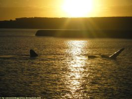 Southern Right Whales 3 by Cansounofargentina