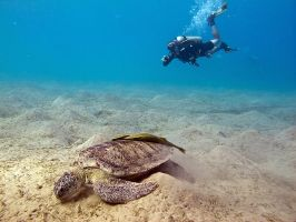 Turtle and diver by scubapic