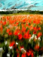 Poppy Field by carlyscanvas