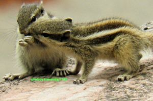 romance of squirrels 4 by kumarvijay1708