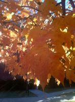 Fall Leaves by tink502