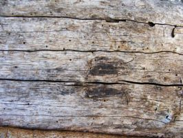 Tree wood Texture stock by Arghel