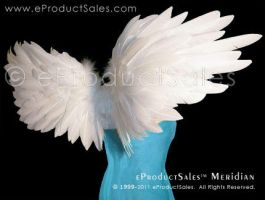 Meridian Wings Rising up by eProductSales