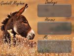 Howrse Layout 22 by Kitty876