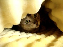 Kittie cave by Designdivala