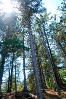 in the pines by Love2B