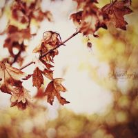 Last leaves by Alessia-Izzo