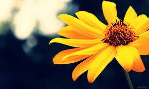 Flower.. by thezgi