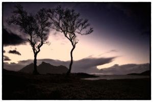 Two trees series (2) by c3ntr0py