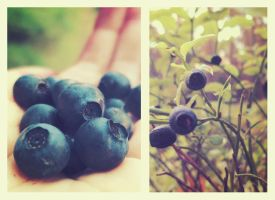 Blueberries by artahh