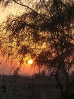 Tree branchs in sunset 9 by Magdyas