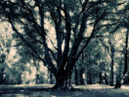 forest 2 by serialkillerstock
