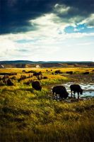 Where the Buffalo Roam by lepersabstain
