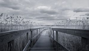 The Path III by Pajunen