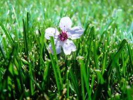 Flower in Grass by the-vicious-poet