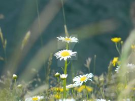 Flowers Blooming by ThroughTheEyePiece