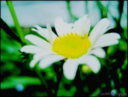Simple Flower. by Sparkle-Photography