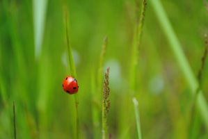 Ladybug in the Grass by Makachop128