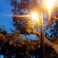 Streetlight... by MarkStarCrashes