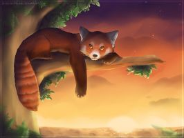 Evening Red Panda by FantaTara
