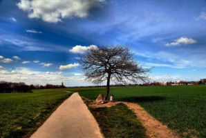 Only one Tree by RoSaVision by Scapes-club
