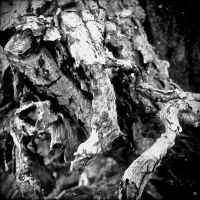 The Roots of a Tree 11 by Jude-Monteleone