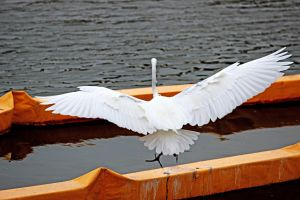 Wing span by winterface