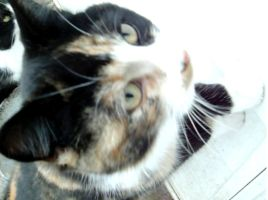 Cally the calico cat by ReturningDragon
