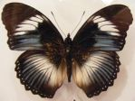 moths and butterflies stock132 by hatestock