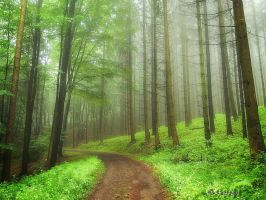 Misty Forest III by Weissglut
