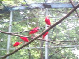 Birds at the Zoo by AAAPhotography