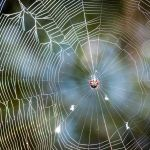 Spiny Orb Weaver says hello by speedofmyshutter