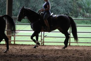Working Light Breed Stock3 by OceanLore
