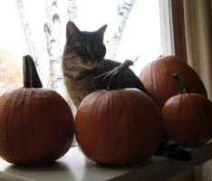Lexy with Pumpkins by TigressRampant