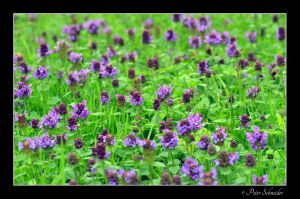 meadow by Phototubby