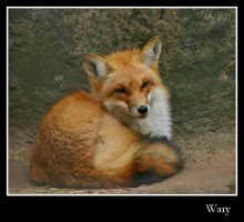 Wary by evisione