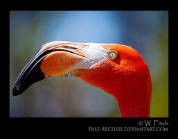 Flap Pinko by Pale-Recluse
