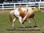 Paint Horse Stock 5 by EquineStockImagery