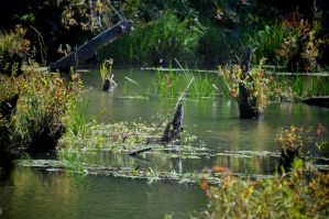 The Swamp 2 by Tailgun2009