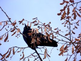 Bird On Tree by Samplle