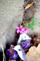 Tiny Pink Flowers by LucyLostInWonderland