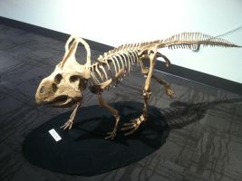 Protoceratops by Sanluris