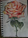 First Rose :) by Bubits