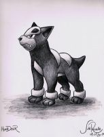 Houndour by johnrenelle