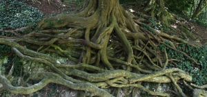 Roots by Phuppet